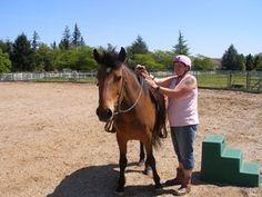 32900 SW Wohler Street Hillsboro, Oregon 97123 Hillsboro Oregon, Horses, Street, Animals, Animales, Animaux, Animal, Animais, Horse