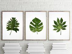 Set of 3 Palm Tree Leaf Monstera Tropical Aralia Leaf Herb