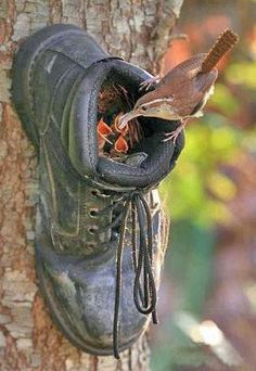 What Can We Do with Old Shoes? Please do not throw away old shoes. You can recycle the old shoes to Decorate Gardens And Outdoor Rooms. Ha Vagas, Old Boots, Cowboy Boots, Bird Watching, Yard Art, Beautiful Birds, Beautiful Family, Beautiful Images, Amazing Gardens