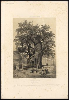 The Chêne Chapelle or Chapel Oak of Allouville-Bellefosse in the northern French region of Haute-Normandie is the most famous tree in France. Since 1669 the ~1000 year old tree has housed two tiny religious chapels (Notre Dame de la Paix [Our Lady of Peace] and Chambre de l'Ermite [the Hermit's room] in its hollow trunk, together with an outside spiral access staircase