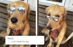 I didn't know America had a dog...