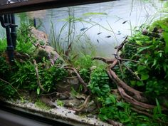 WaterSong par Erikstras. #aquascaping #aquarium