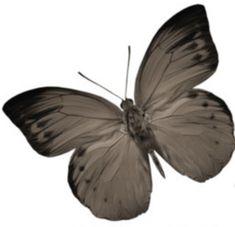 Moth, Romance, Dark, Animals, Romance Film, Romances, Animales, Animaux, Animal