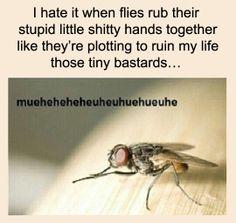 Stupid flies.