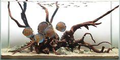 best akvarium biotop - Hľadať Googlom