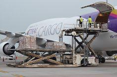 Thai Airways Cargo Boeing 747 freighter being loaded ǀ Air Cargo News