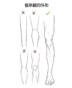 人体腿部结构的分析和学习,自己收藏~转需...