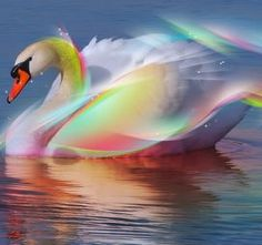This is a beautiful swan! Want a swan? Want this swan? Then like and hit the read bottom then screenshot and use a ps wallpaper! Free 3d Wallpaper, Wallpaper Gratis, Swan Wallpaper, Wallpaper Free Download, Animal Wallpaper, Wallpaper Downloads, Wallpaper Maker, Wallpaper Gallery, Beautiful Wallpaper