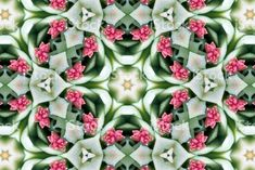 Digitally Designed Modern Style Succulent Inspired Mandalas from my. Abstract Photos, Image Now, Modern Design, Succulents, Royalty Free Stock Photos, Inspired, Rose, Creative, Flowers