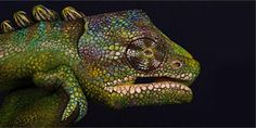 "Artist Guido Daniele's series of paintings called ""Handimals"" features human hands painted to resemble animal"
