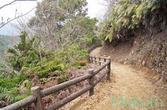 Trail over the Matsuo mountain pass. On the long stretch between temples 40 and 41, Kochi prefecture. This particular piece is north of Sukumo town.