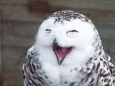 47 Superb Owls