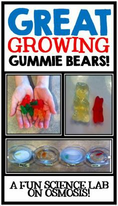 Great Growing Gummie Bears!  A fun science experiment on Osmosis!  Step by step instructions, teacher tips, material list, and student lab book included!  Everything you need to conduct this sweet experiment!