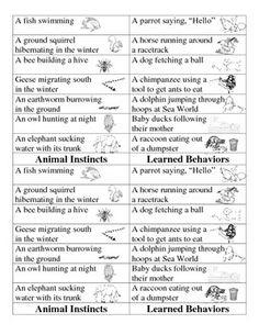 Instincts vs. Learned Behavior Card Sort