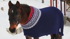 Horses asked how they prefer to stay warm - Norwegian research on blankets Pet Sweaters, Knitting Humor, Cool Pets, Stuffed Animal Patterns, Ugly Christmas Sweater, Stay Warm, Iceland, Pony, Cute Animals