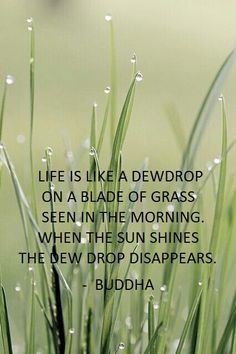 Buddha | www.pinterest.com/momentofbliss