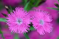 Flower garden in Burnaby B.C.