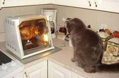 PetsLady's Pick: Funny Bird-Watching Cat Of The Day  ... see more at PetsLady.com ... The FUN site for Animal Lovers