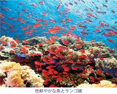 「ゴーゴーダイバーズ」のサンゴ礁を楽しむツアー