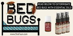 For everyone, the thought of having bedbugs strikes fear into most of us. But bringing them home with us when we travel and stay in motels, hotels or any other lodgings, is something we all wish to. Yl Essential Oils, Young Living Essential Oils, Bed Bugs, Young Living Oils, Loving Your Body, Natural Solutions, Cleaning Hacks, Aromatherapy, Natural Remedies