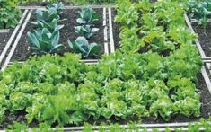 Have you heard of the term biointensive gardening and wondered what it meant? In this article, we are going to discuss all about biointensive gardening plan and how you can do this form of gardening at home. Fall Vegetables, Growing Vegetables, Potager Garden, Garden Landscaping, Garden Bed, Design Jardin, Garden Design, Biointensive Gardening, Farm Online
