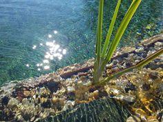 Holzwand im Naturpool - kristallklares Wasser City Photo, Wood Walls, Crystals, Water