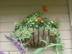 Hanging basket on the garage