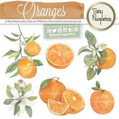 Naranjas Clip art Ramas y Flores Naranjo PNG fondo por TanyNogueira
