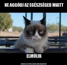 """Képtalálat a következőre: """"grumpy cat magyarul felirattal"""" Funny Cats, Funny Animals, Cute Animals, It's Funny, Funny Sayings, Hilarious, Grumpy Cat Humor, Cat Memes, Grumpy Cats"""
