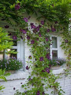 All Stuff: A Perfect Garden - II