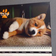 2011 corgi calendar - December