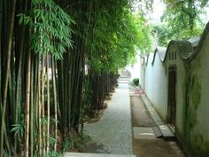 images about Tropical Landscaping on Pinterest