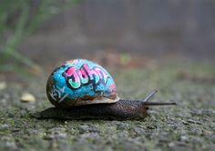 New street art trend? Painting a snail New street art trend? Painting a snail New street art trend? Painting a snail Graffiti Writing, Graffiti Artwork, Street Art Graffiti, Graffiti Artists, Graffiti Lettering, Street Artists, Snail Art, Urbane Kunst, Chalk Art