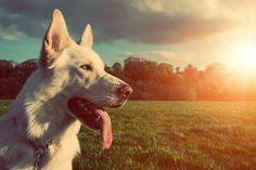 Dovolená se psem | Cestujeme Šumavou