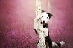 . This is MY tree.....go pee on your own tree. Heartwarming Dog Portraits By Polish Photographer Alicja Zmyslowska | Bored Panda.