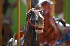 Carousel Museum, Horses, Animals, Animales, Animaux, Animal, Animais, Horse