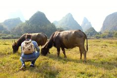 """""""Me getting familiar with incredibly docile and beautiful water buffalo in Yangshuo, China during a break from study. My friends and I rented scooters and rode out into the countryside to see how rural Chinese live, met a lot of great people, saw some beautiful places, and had a solid day. """" Demetri Savas, Shanghai, China"""
