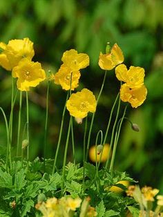 Cold Climate Gardening, Planters, Herbs, Planter Boxes, Herb, Plant, Flower Pots, Pots