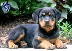 """Top 10 Worst Dog Breeds to Get Along With Children-this is THE dumbest article, most of the breeds are just """"hard to train"""" or too big for kids so that means the are bad? Hate"""