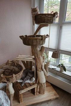 Satisfied purring - natural wooden trees for cats cat playground - cats - Happy purring natural wood trees for cats cat playground - Cat Playground, Natural Playground, Playground Ideas, Diy Cat Tree, Outdoor Cats, Outdoor Play, Wooden Tree, Cat Room, Cat Furniture