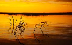 There are three national parks, Bwabwata, Mahango and Nkasa Lupala in the Caprivi that are part of KAZA. Land Of The Brave, Okavango Delta, The Perfect Getaway, Photography Tours, Touring, National Parks, Adventure, Sunset, Landscape