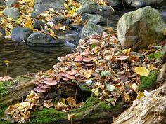 Csörgő-patak és gombák