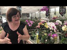 Beach Wedding Centerpieces, Youtube, Flora, Cactus, Women, Fashion, Giving Flowers, Desert Rose, Gardening