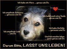Lasst uns leben! >> http://www.ich-liebe-tiere.com/ << STOPT TIERQUÄLEREI!!!! Tiere haben es auch verdient zu leben