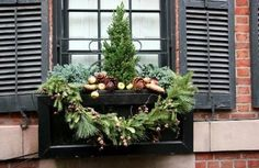 Sixty-Fifth Avenue: Winter Window Boxes