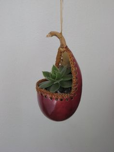 Hanging Gourd terrarium with succulent hens and by redbarnartisans, $8.00