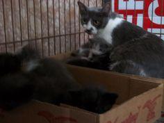 Animal Adoption Photos | Putnam County Sheriff's Office