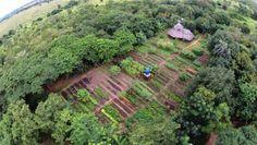 Znalezione obrazy dla zapytania tropical permaculture design