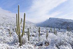arizona - Pictures, photos and images from Benson, AZ Snow In Arizona, Sonora Desert, Flagstaff Arizona, Living In Arizona, Desert Homes, Paradise On Earth, Snowy Day, Best Photographers, Tucson