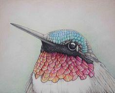 Pencil Art Work Close Up Hummingbird Mixed Media Original Drawing-Print Mixed Media=Color Pencils and Color Markers. Drawn in July 2013.Neutral